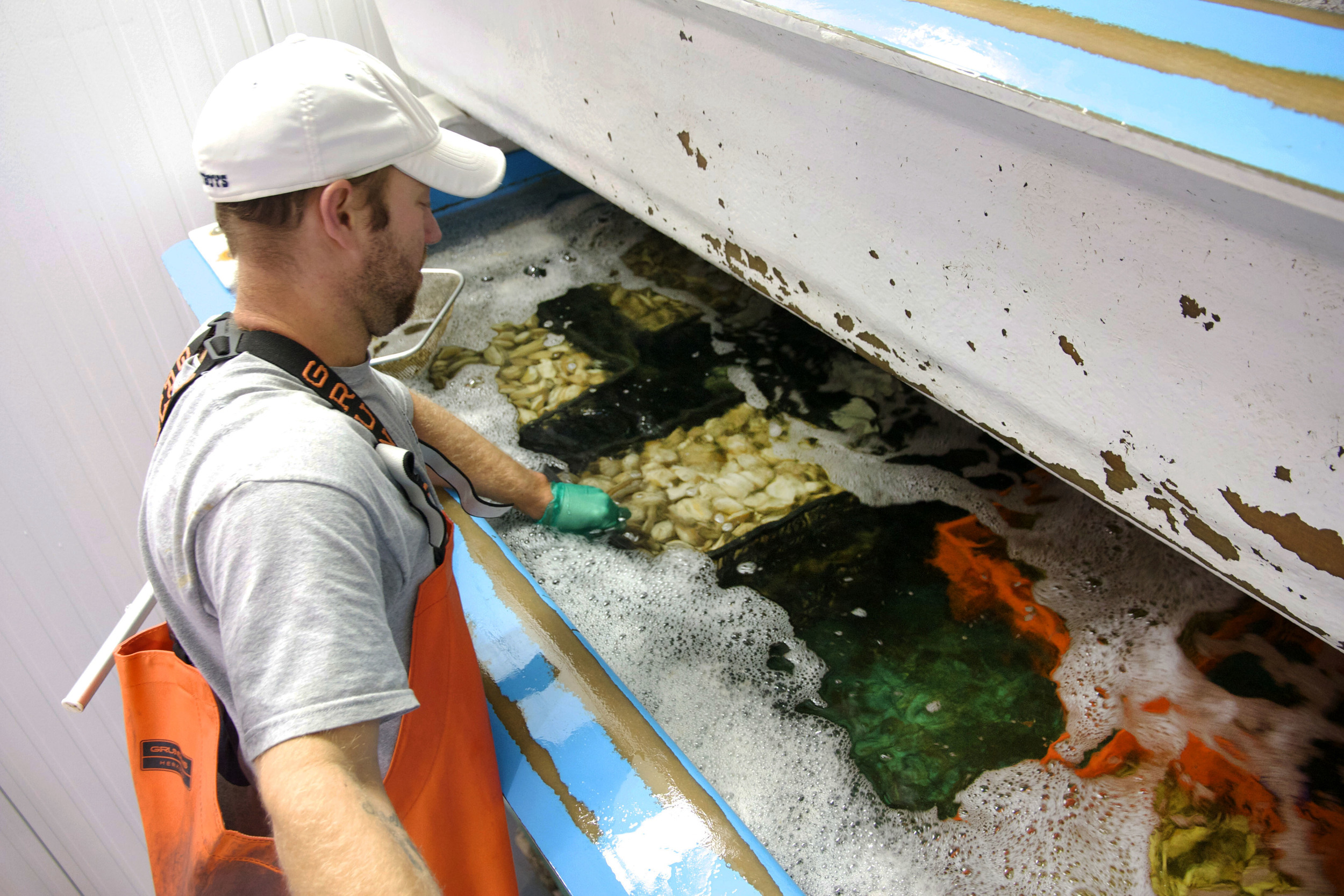 Juliano, our Wet-Storage Specialist, adjusting Perfectly Purged Steamers in the wet-storage system.