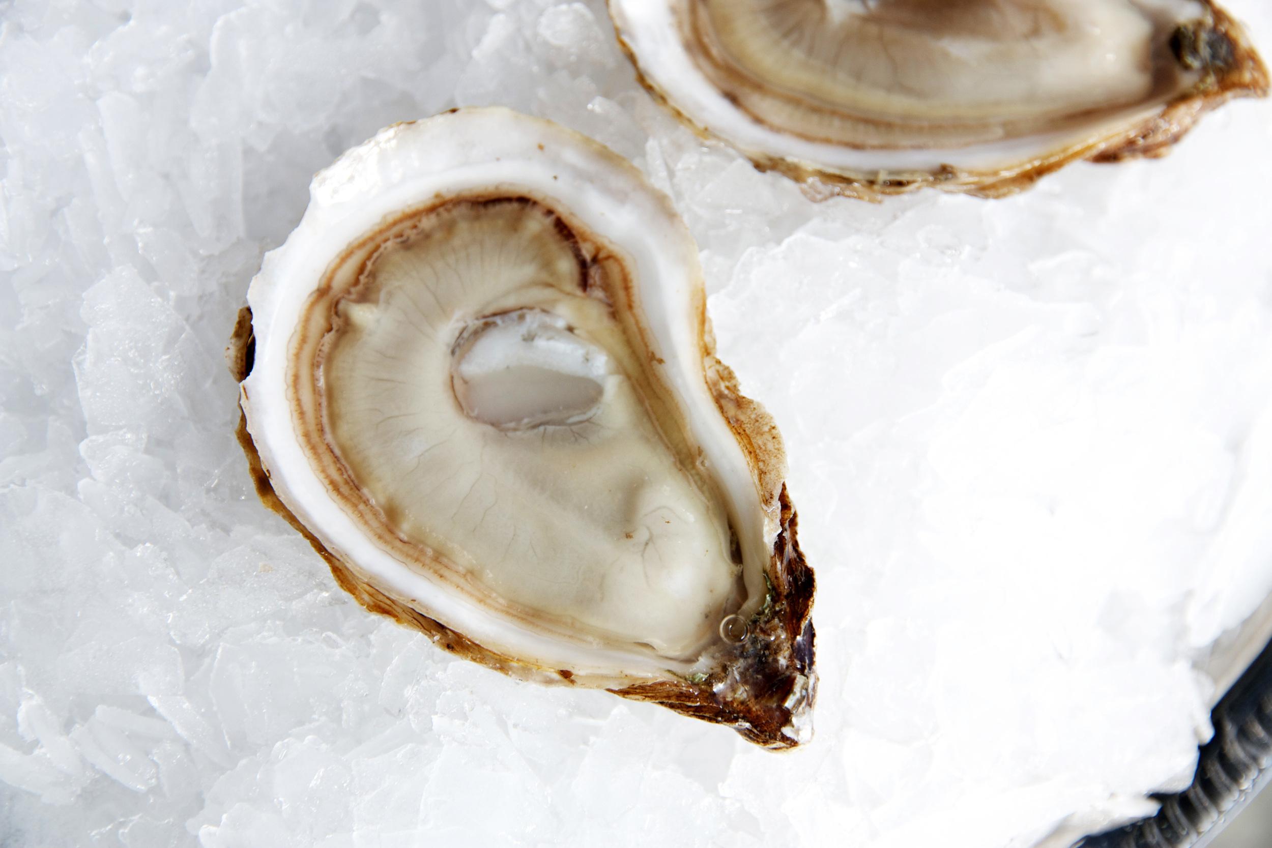 Pangea Shellfish Saint Simon Oyster 1.jpg