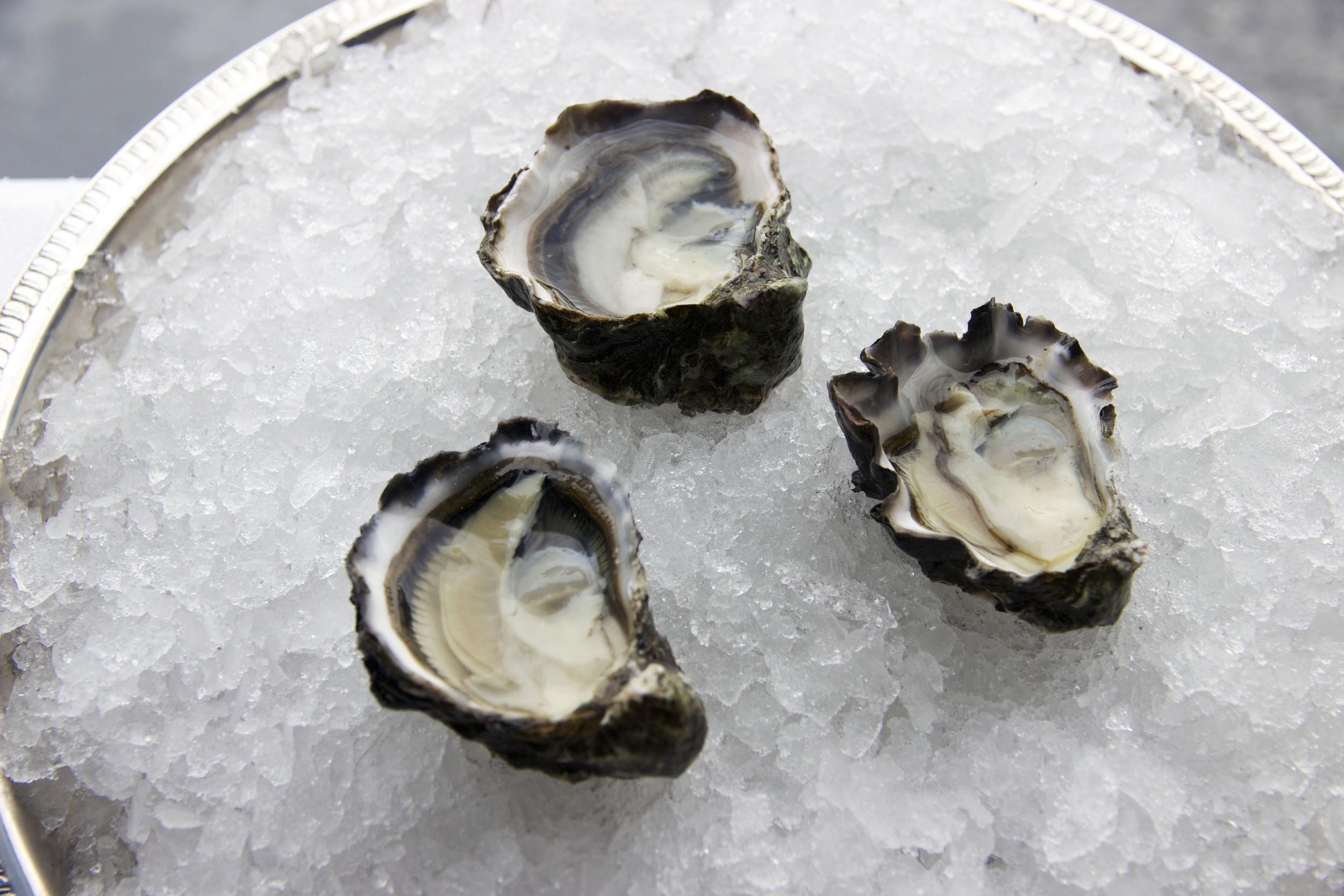Pangea Shellfish Kumamoto Oyster Open 2.jpg