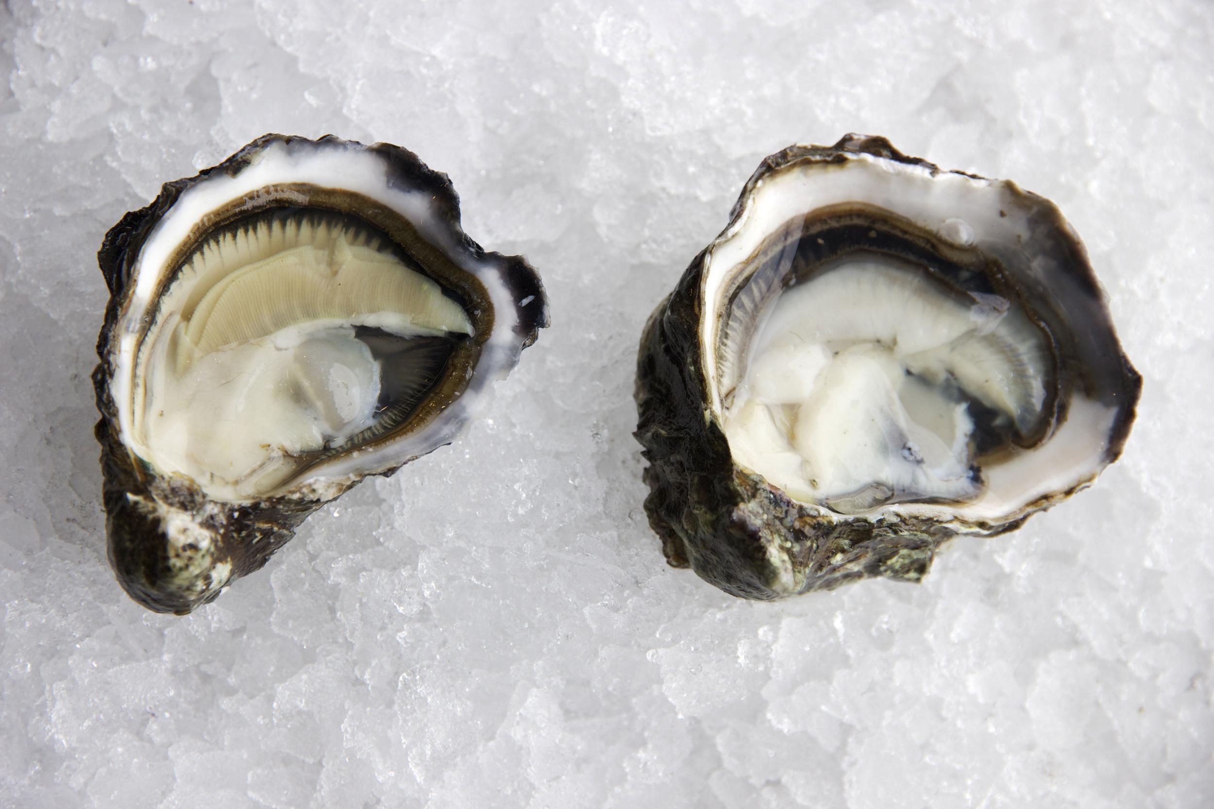 Pangea Shellfish Kumamoto Oyster Open 3.jpg
