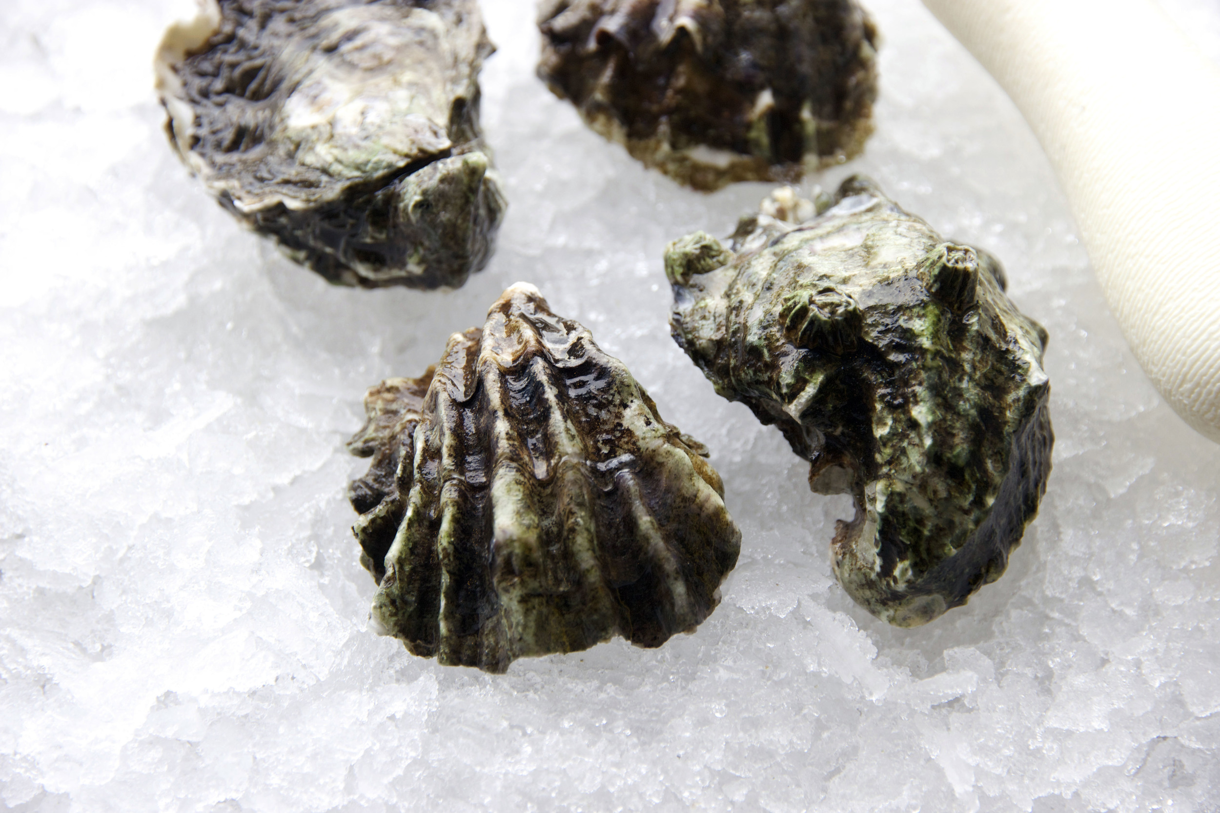 Pangea Shellfish Kumamoto Oyster Shell 2.jpg