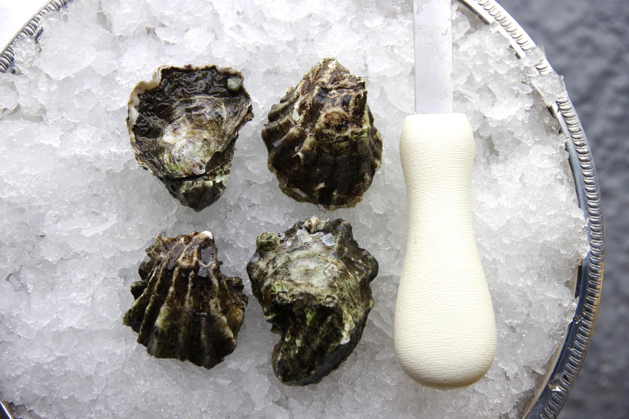 Pangea Shellfish Kumamoto Oyster Shell.jpg
