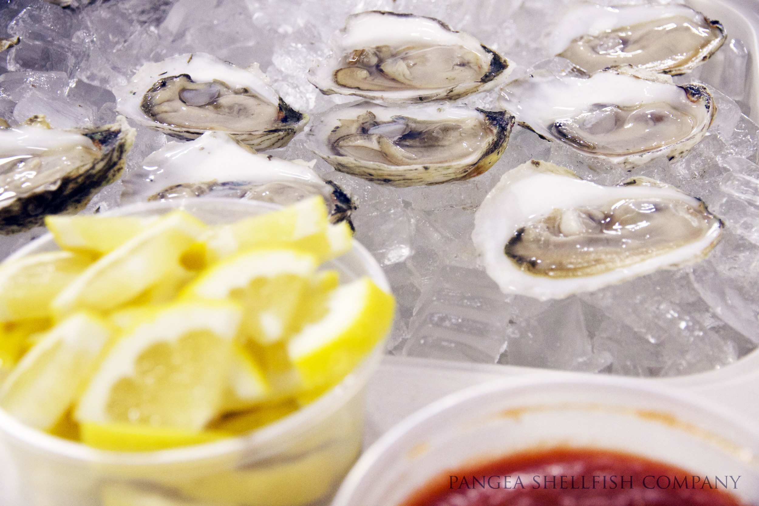 Standish Shore Oysters at Earth & Sea.jpg