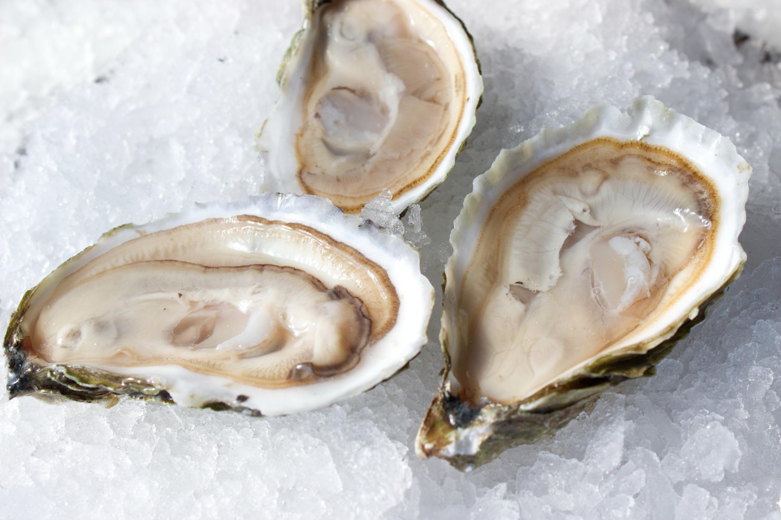 Pangea Shellfish Wild Thirty-Ones Open 2.jpg