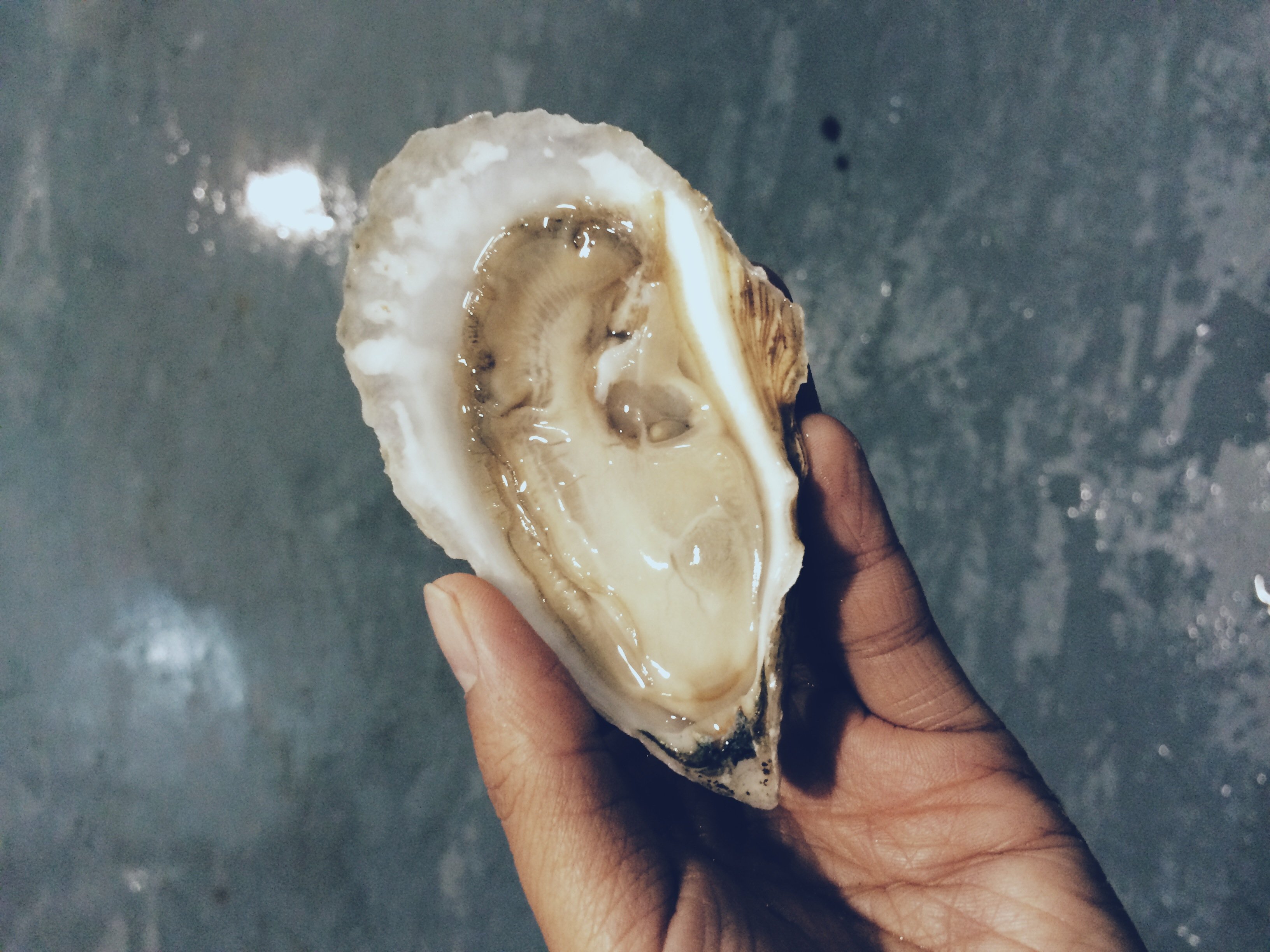Thatch Island Oyster shucked on Oct. 2, 2014