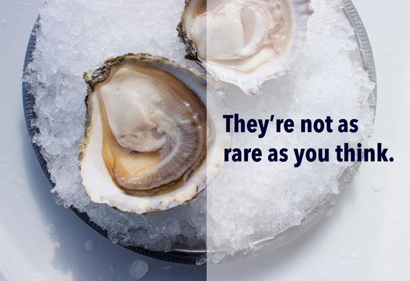 belon oyster blog