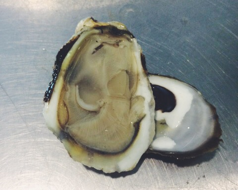 copps island oyster