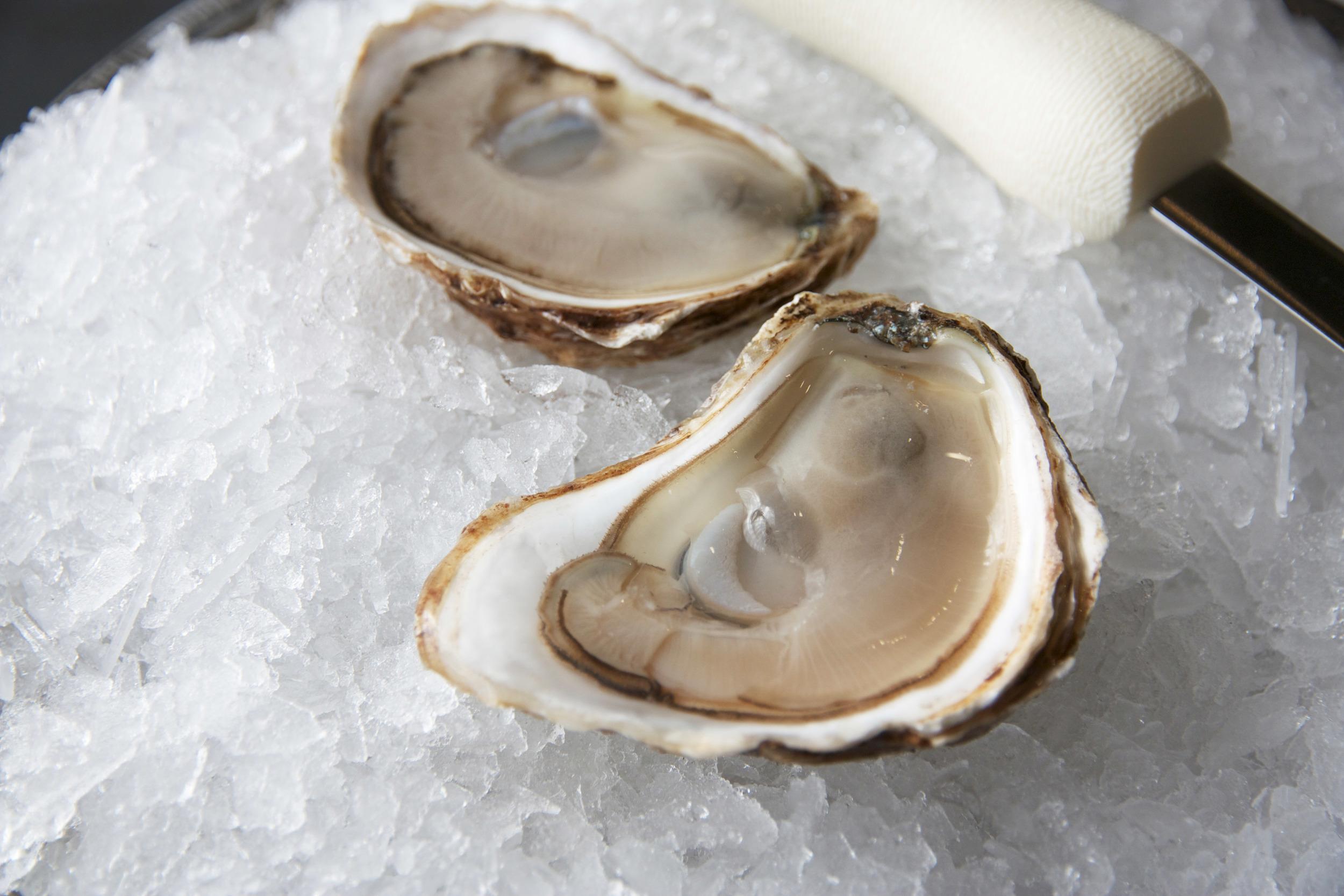 Pangea Shellfish Passion Oyster 1.jpg