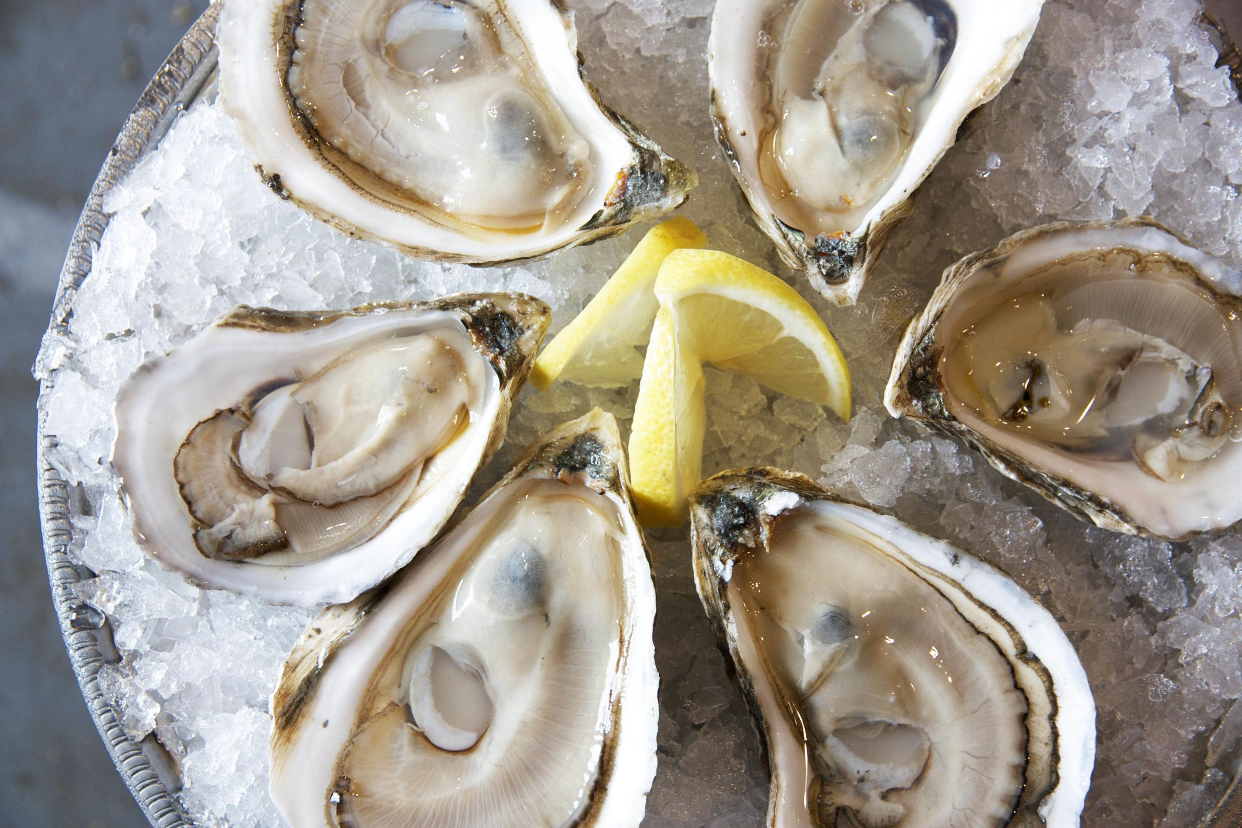 Pangea Shellfish Pemaquid Oysters On Ice.jpg