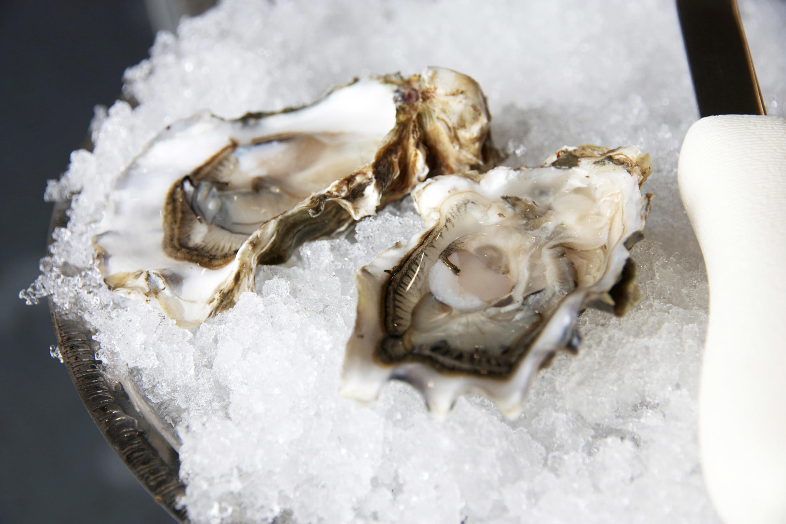 Pangea Shellfish Pickering Pass Oysters 2.jpg