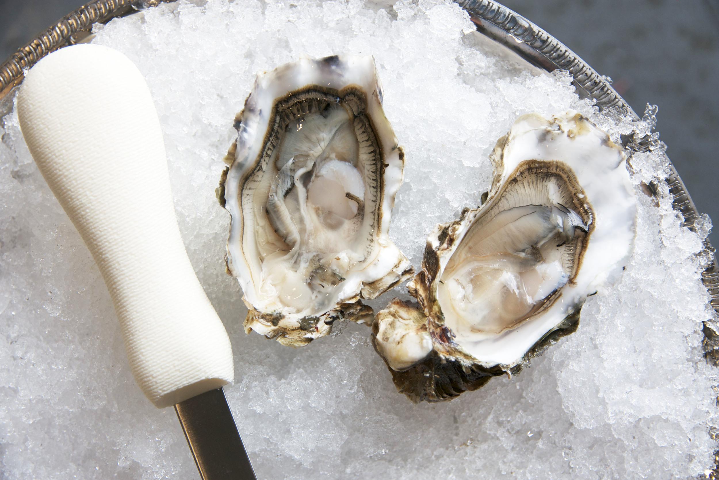 Pangea Shellfish Pickering Pass Oyster.jpg