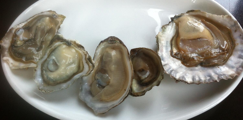 oyster varieties.jpg