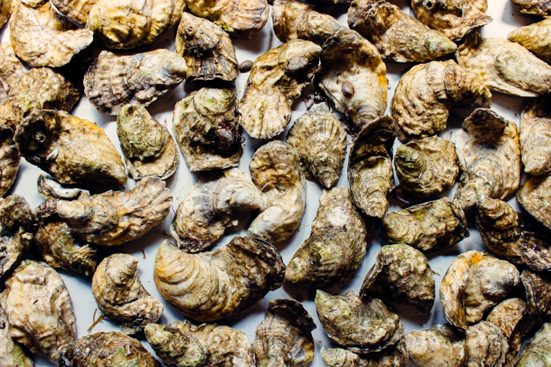 Standard oysters vary in size and shape