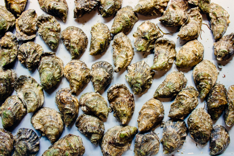 select oysters are more consistent and uniform in shape