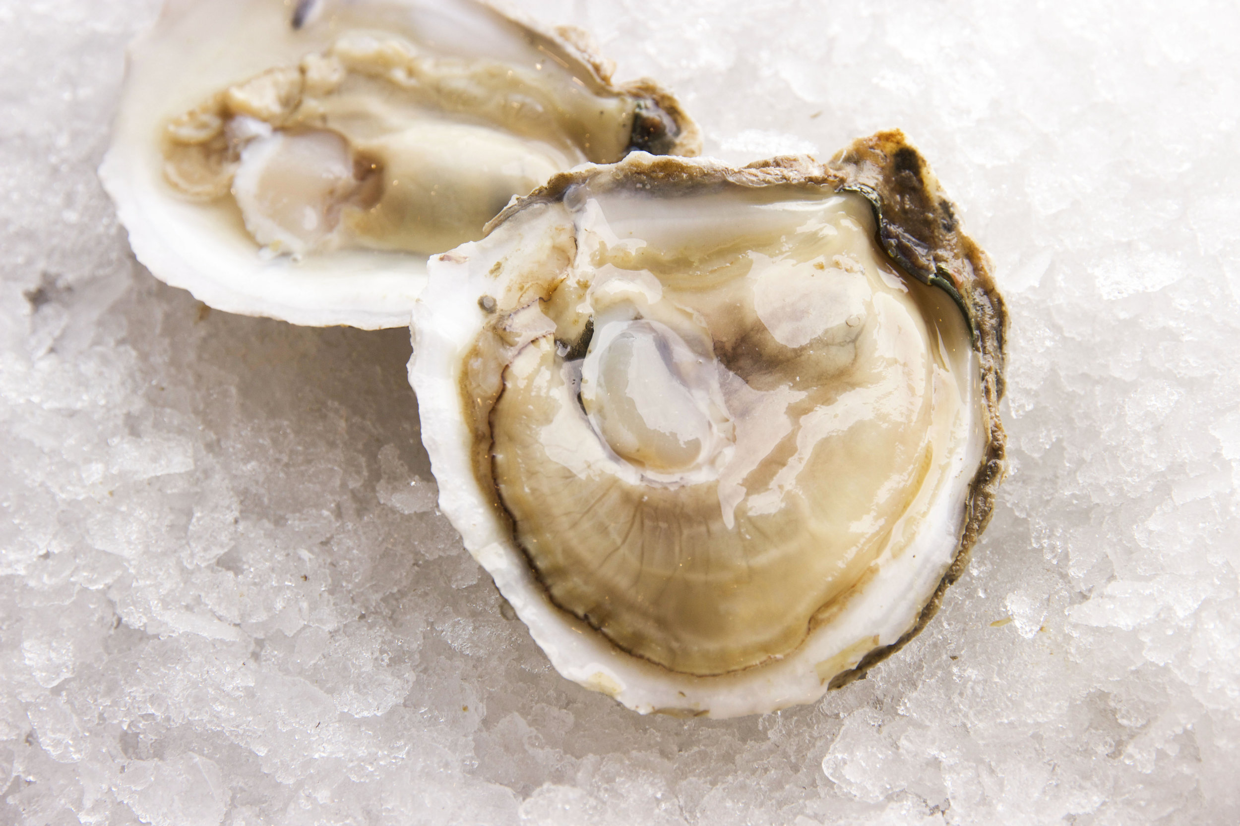 jAMES rIVER oYSTERS
