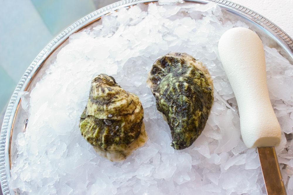 WR-Ninigret-Shell-Pangea-Shellfish.jpg