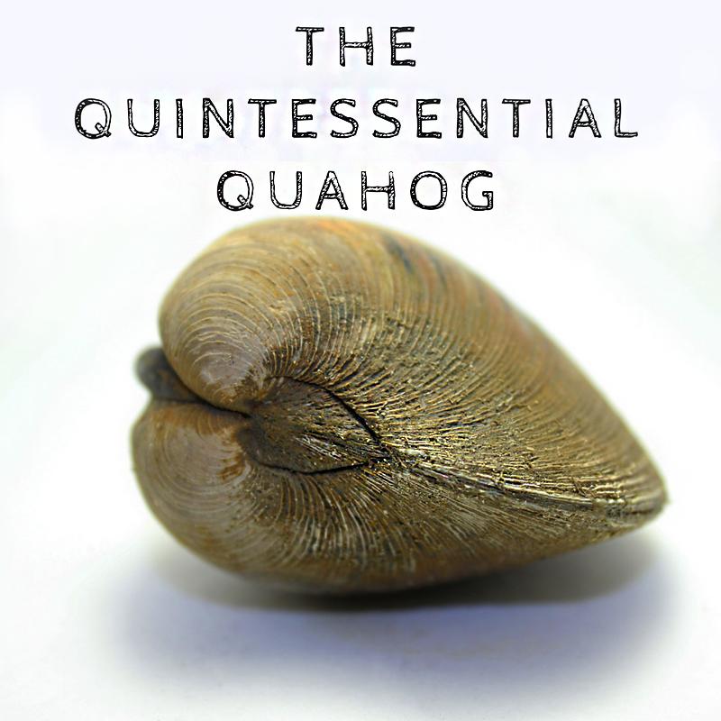 The Quintessential Quahog FINAL.png