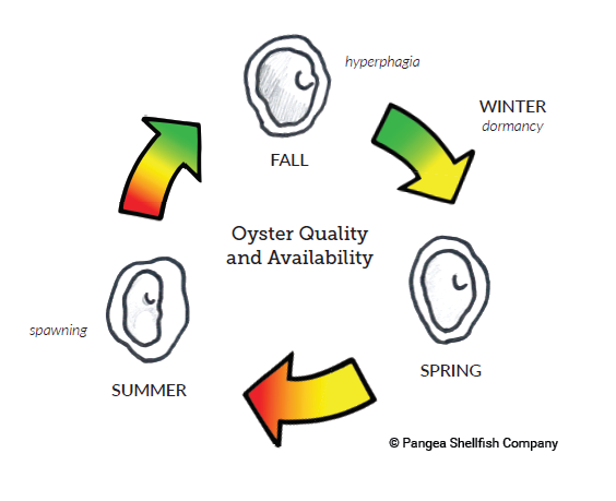 oyster quality cycle_pangea.PNG