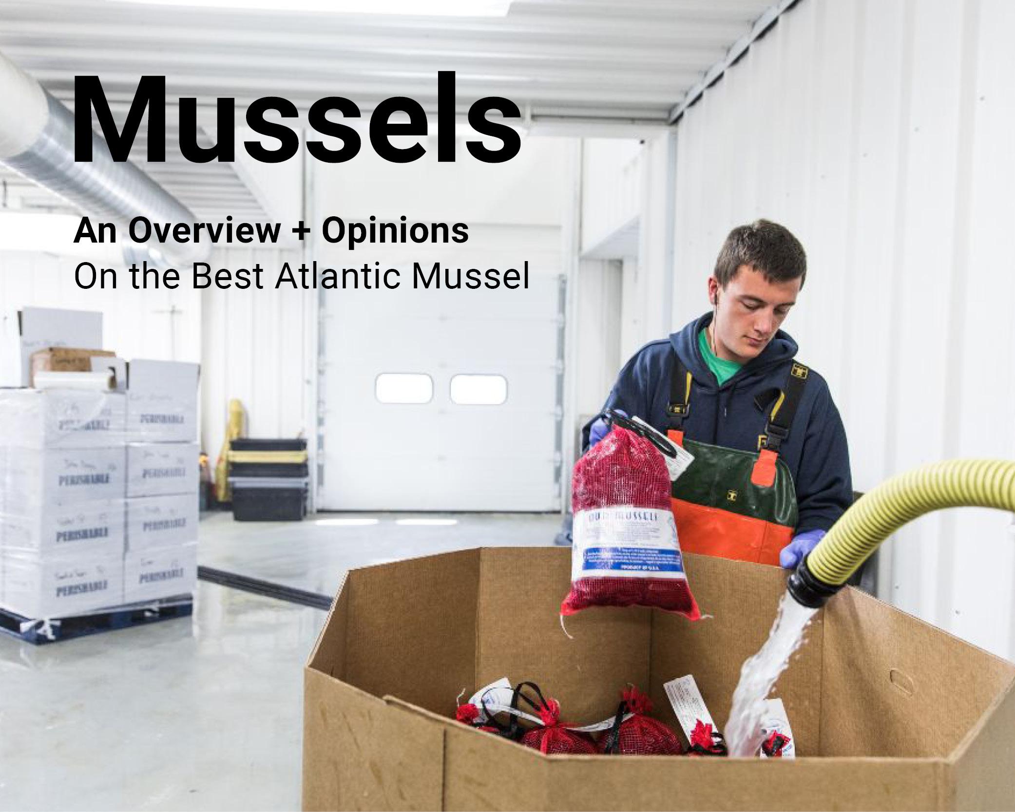 mussel newsletter header.jpg