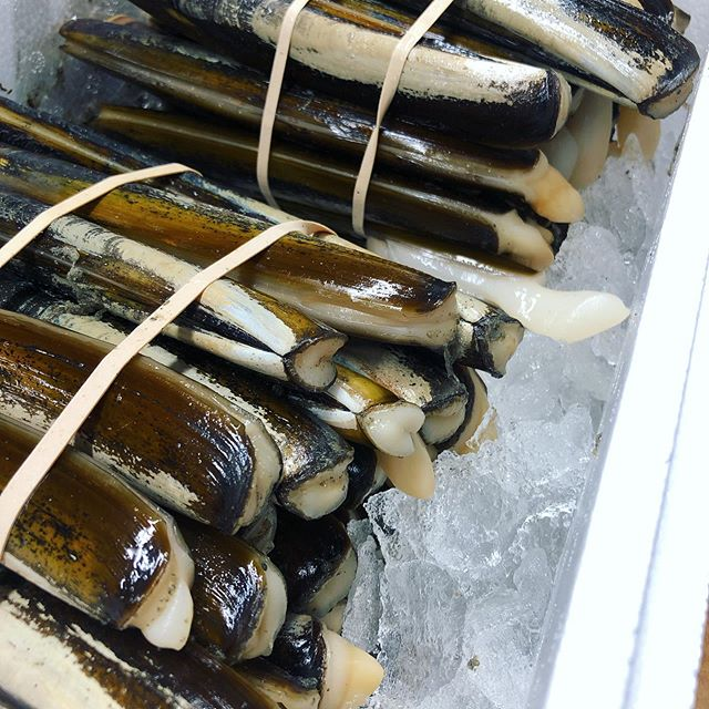We have DIVER harvested razors clams from Muscle Ridge Island, Maine. They're large (about 6-8 per pound) with thick shells that are perfect for the grill! #staysharp #razorclams #maineshellfish #ensisdirectus #diverharvested