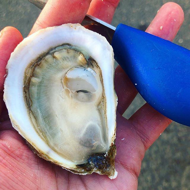 Savage. Blonde. This oyster is raging it's way into summer with its sweet brine, satin meats, and a finish that lingers like a cape sunset. #eatmoreoysters #PEIshellfish #SavageBlonde