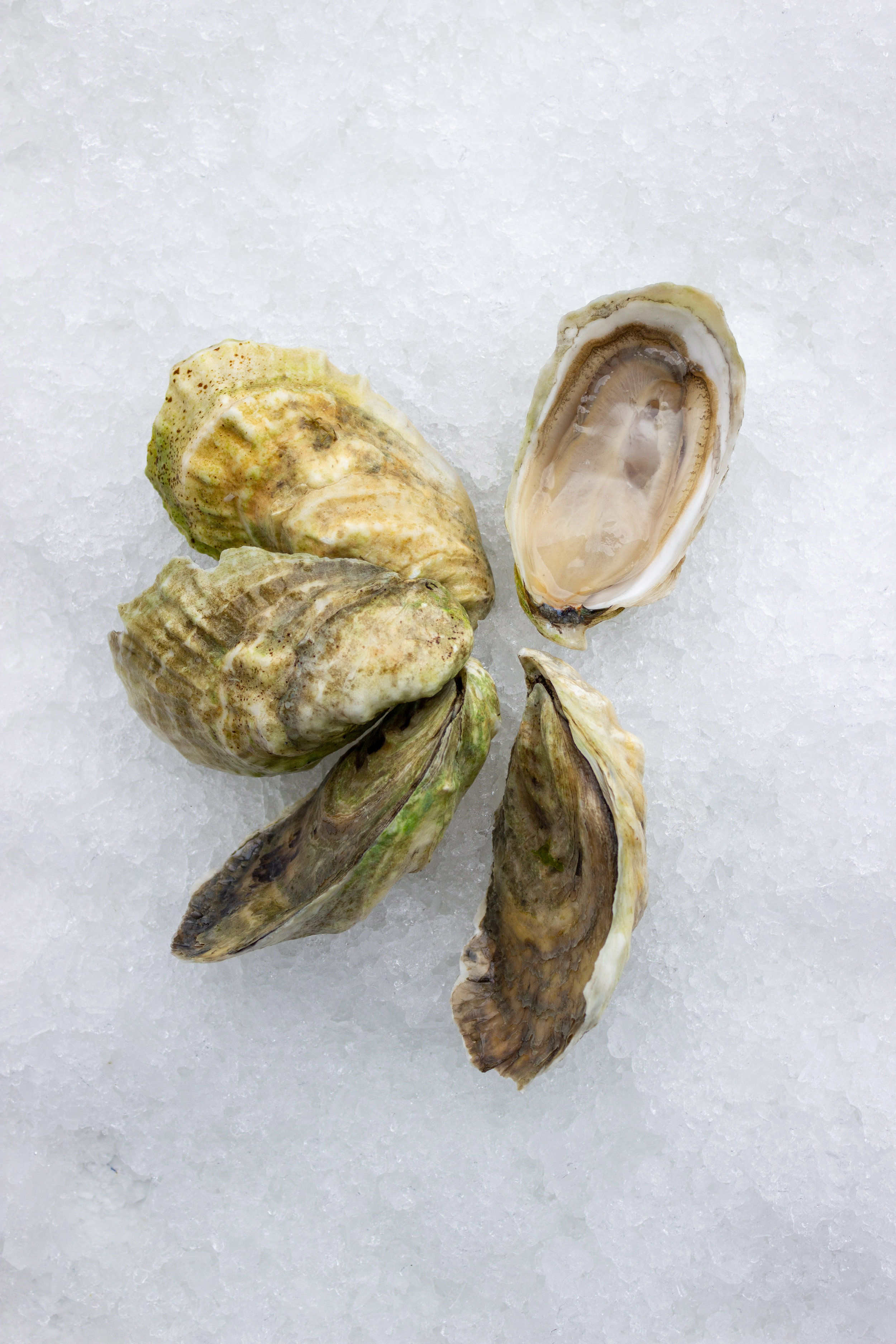 A fresh oyster is alive, has ample liquor, and maintains its aroma and flavor from harvest. -