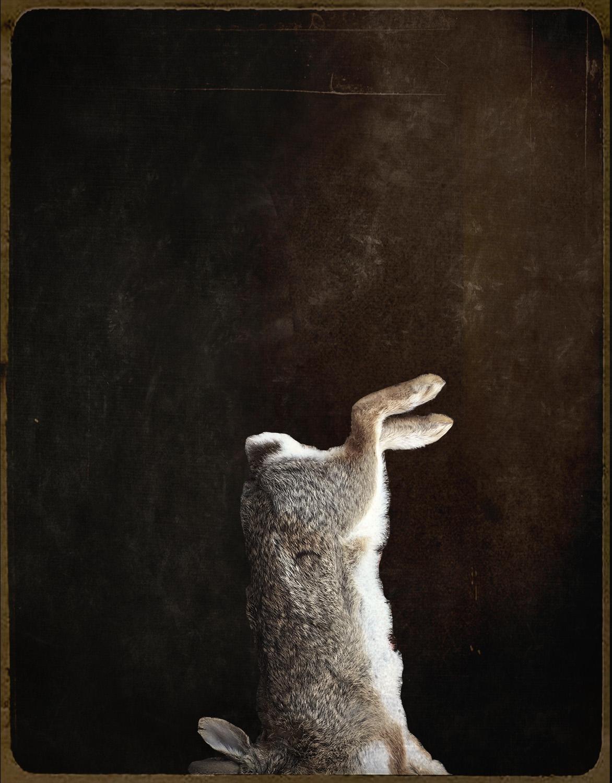 bunnyfoofoo.jpg