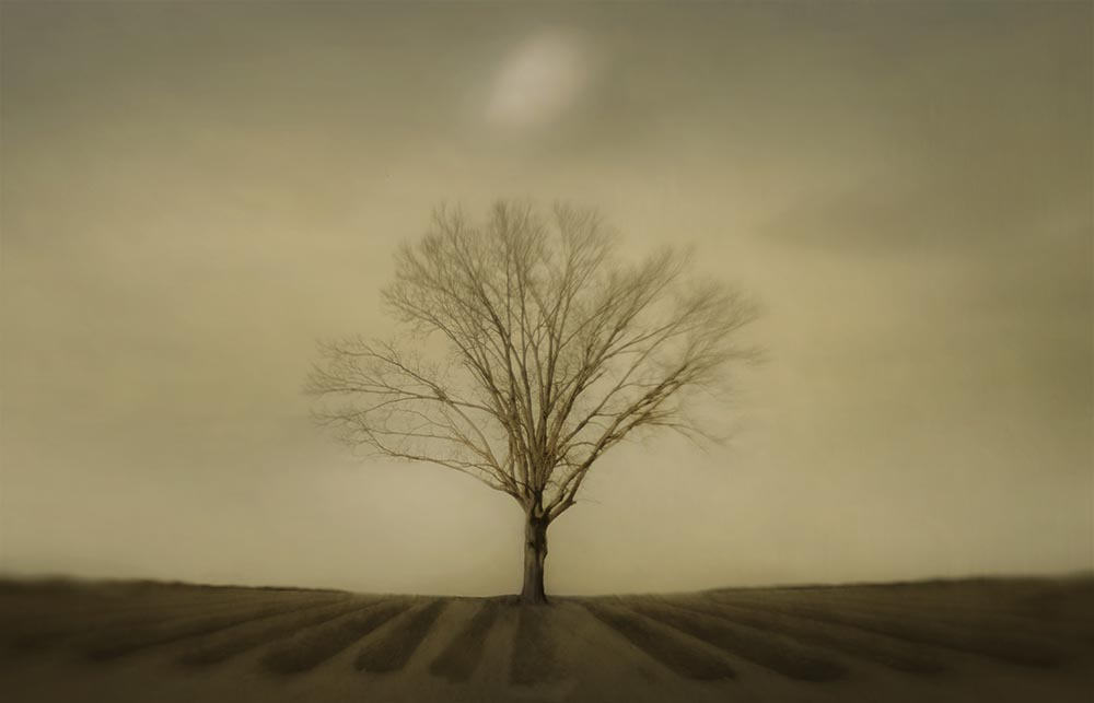 tree_memorial.jpg