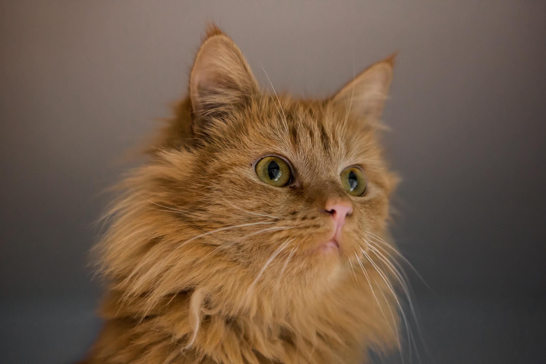 KW_Cats1_013.jpg