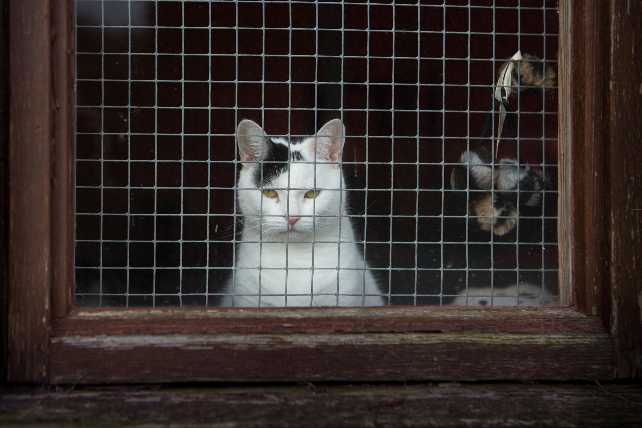 KW_Cats1_027.jpg