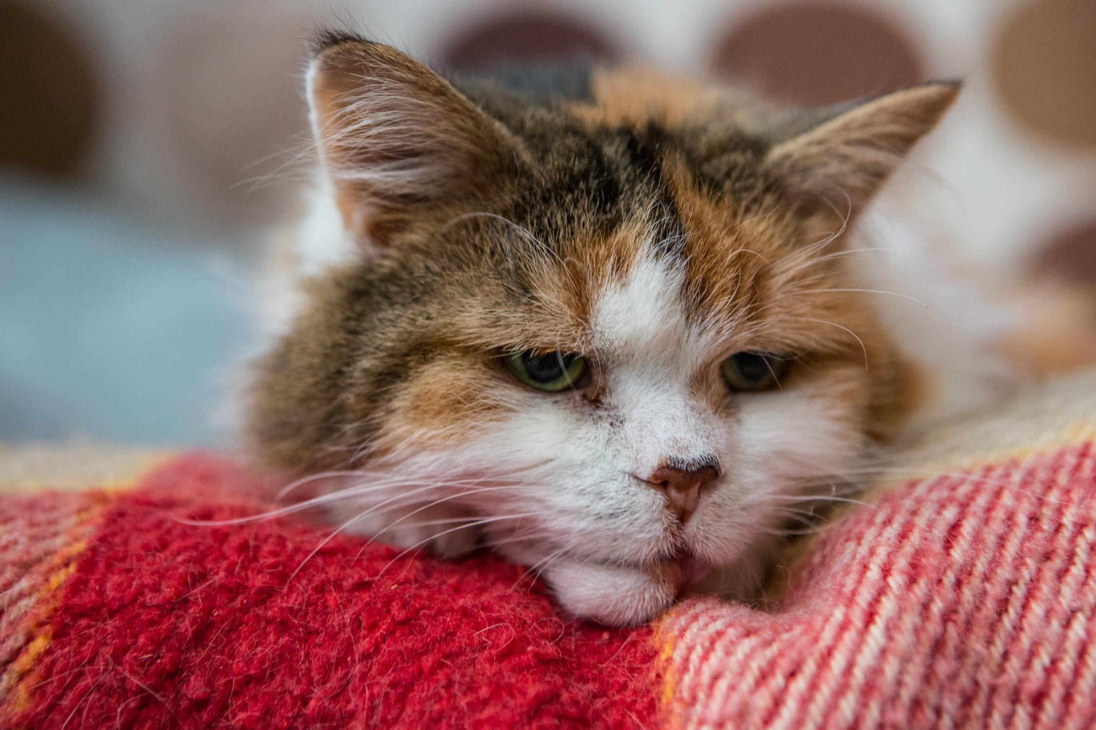 KW_Cats1_036.jpg