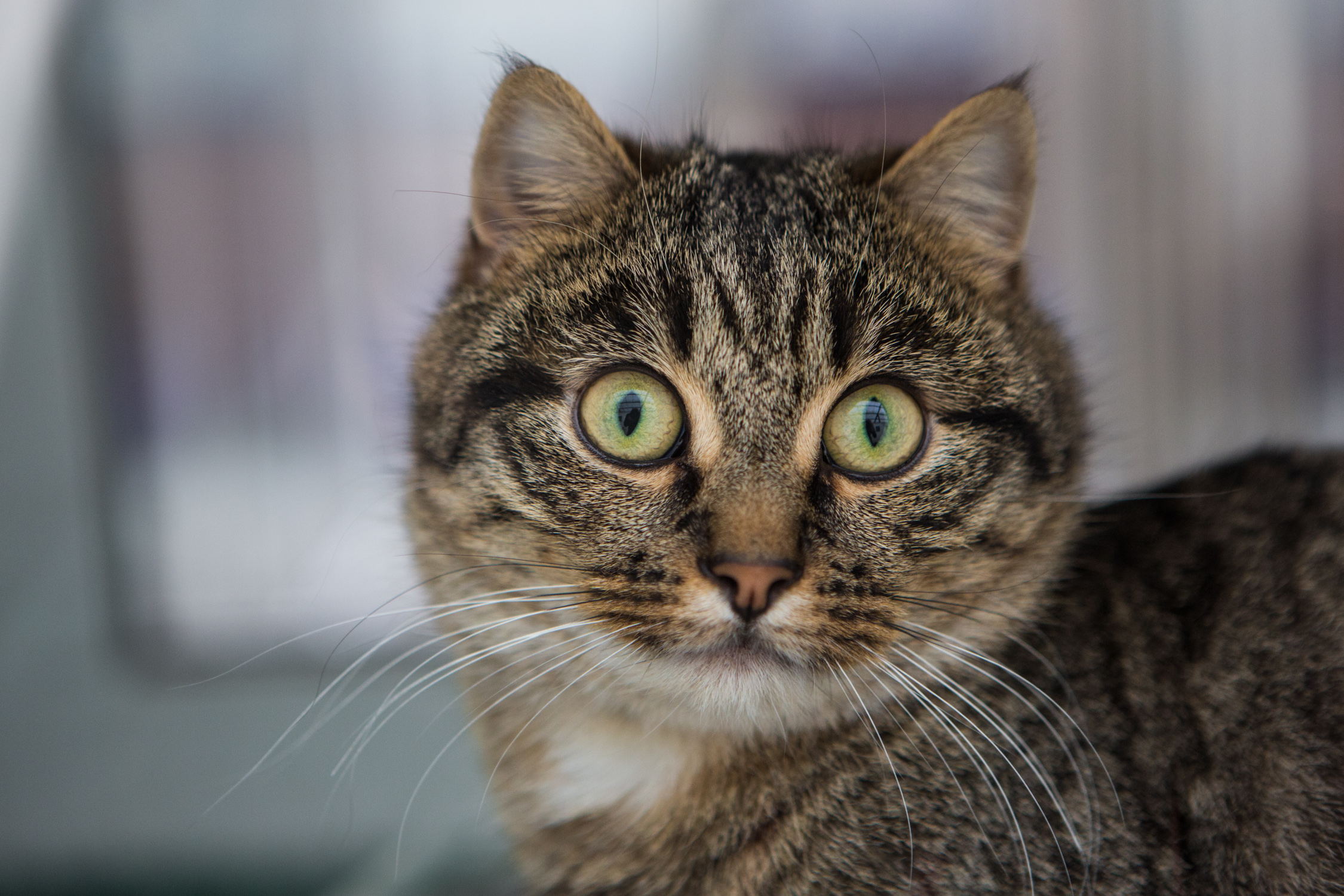 KW_Cats1_040.jpg