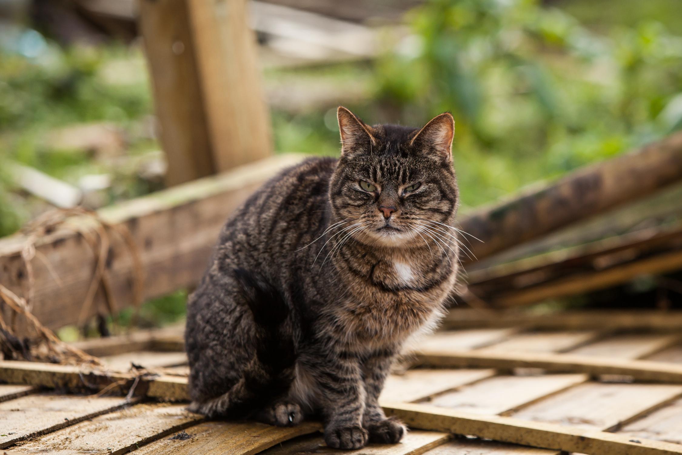 KW_Cats1_045.jpg