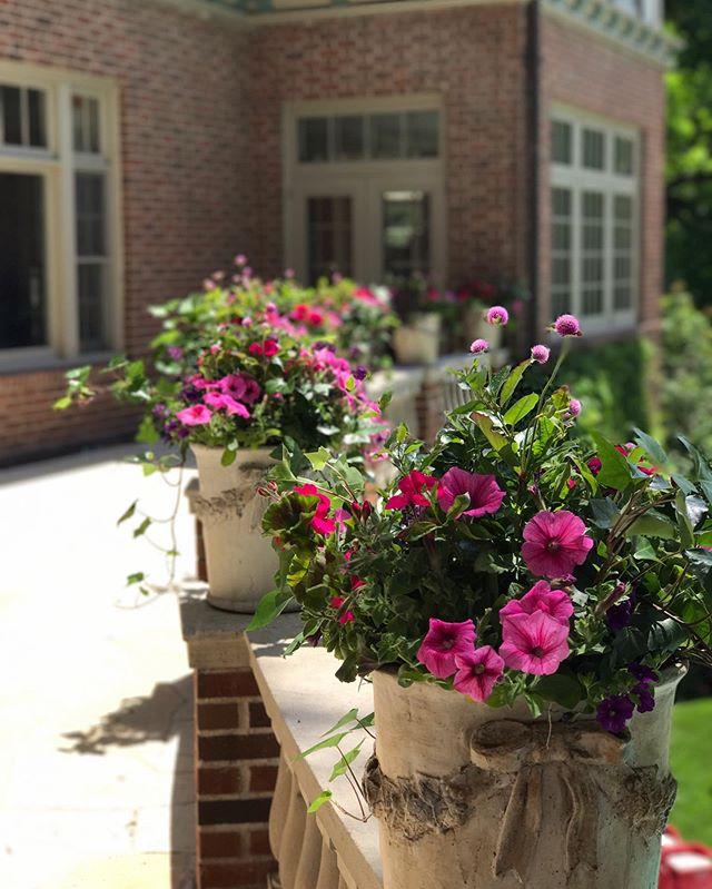 Planting season is here!!! @harvesthomewayzata #shoplocal #spring #privateplanting #lakeminnetonka #msp #harvesthomewayzata #twincities #floral #wayzata