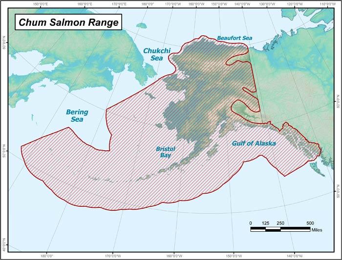 Alaska-Chum-Salmon-Range.jpg