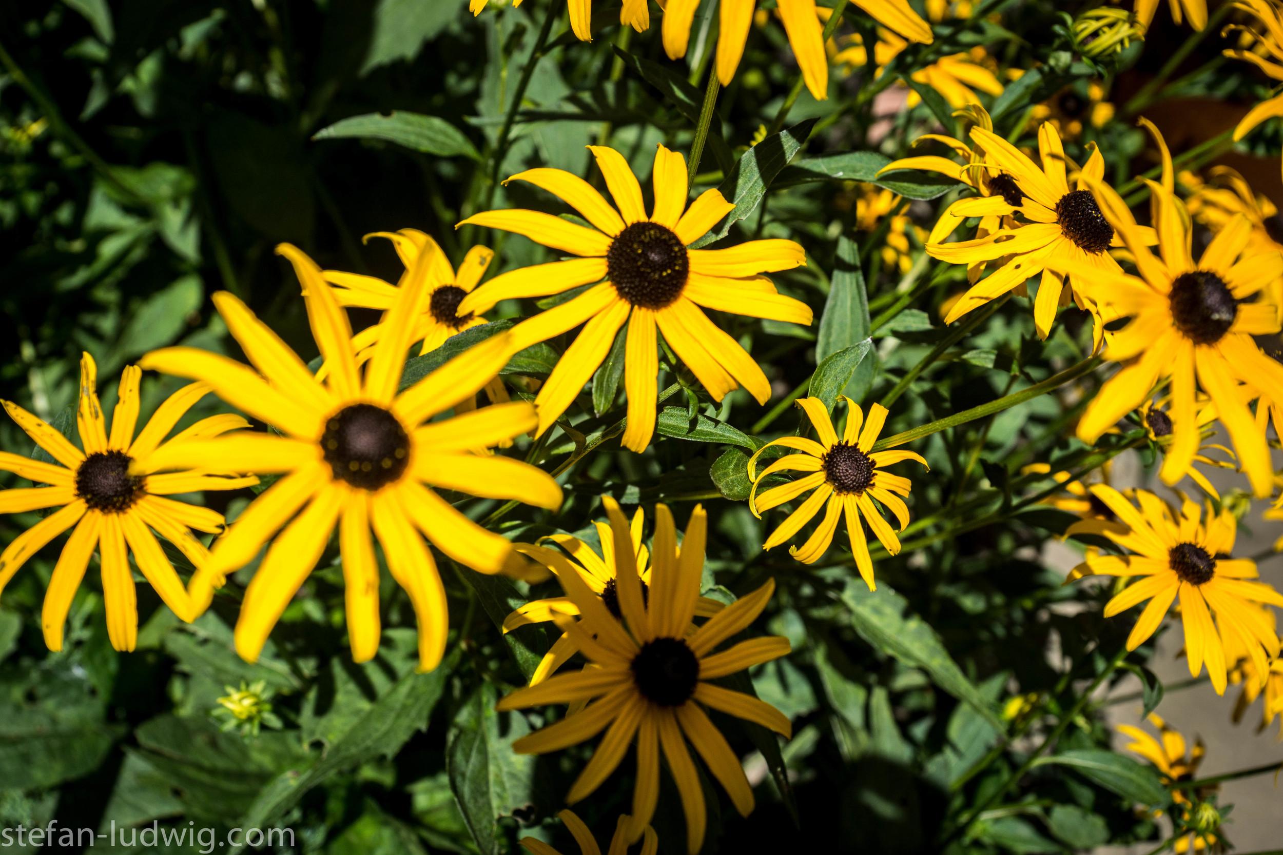 GardenWalk2013-04867.jpg