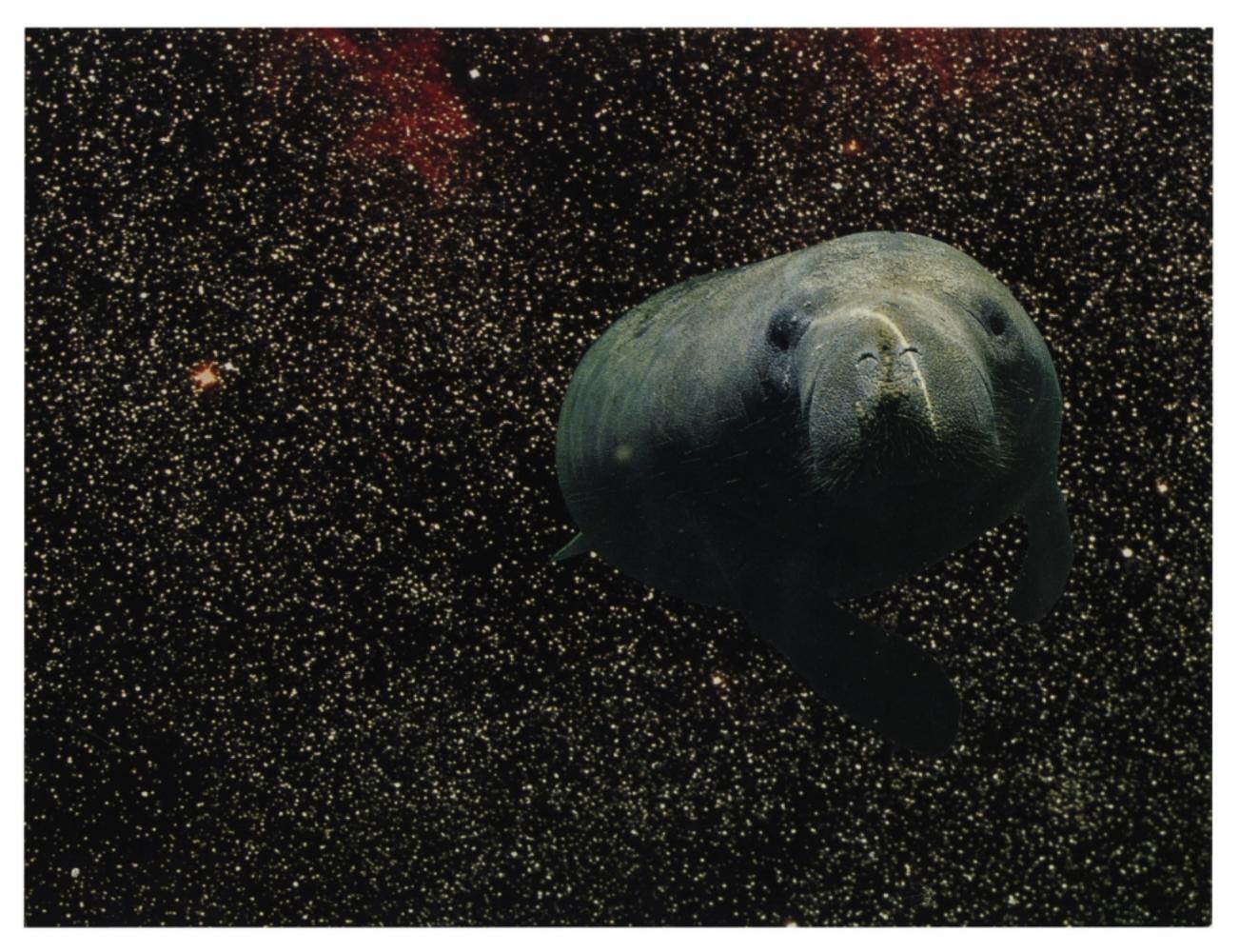 Cosmic Manatee