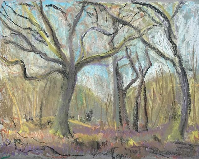 In the woods #springintheair #drawing #southdowns
