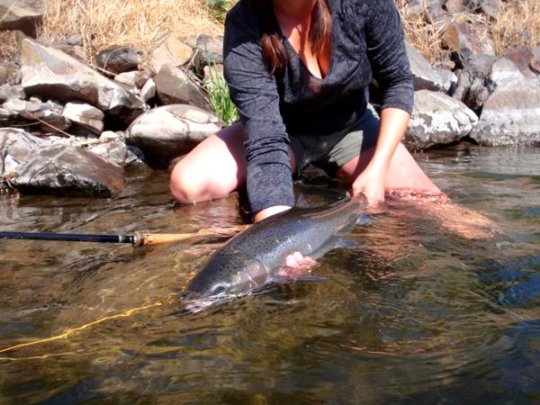 July Deschutes River steelhead.jpg