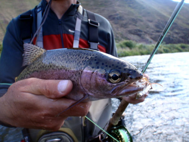 Deschutes River fly fishing report.jpg