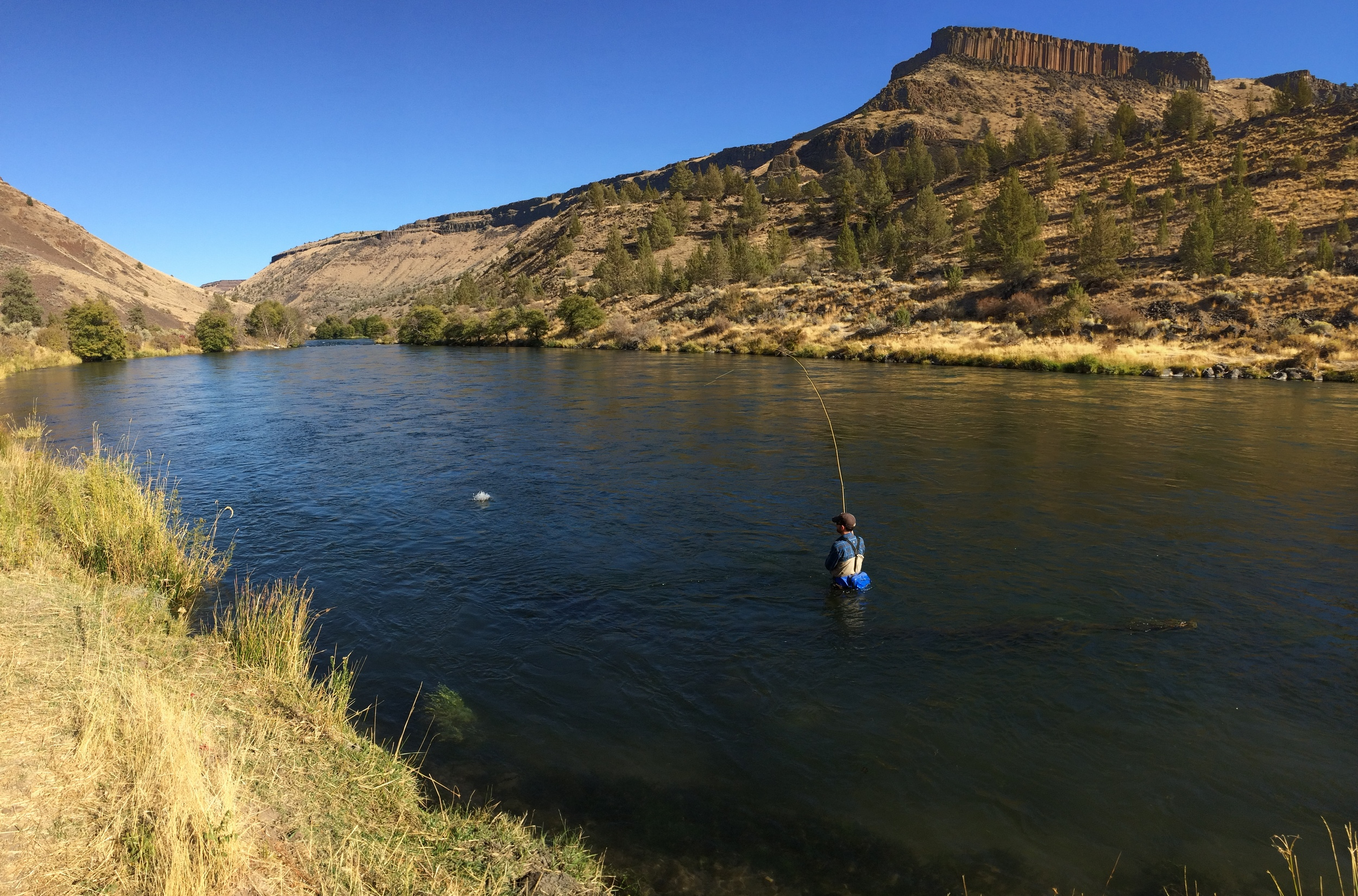 """Dan Lemoine connects while fishing a classic """"bay style"""" run on the upper river. The 45 mile stretch from Warm Springs to Maupin played an important roll this year."""