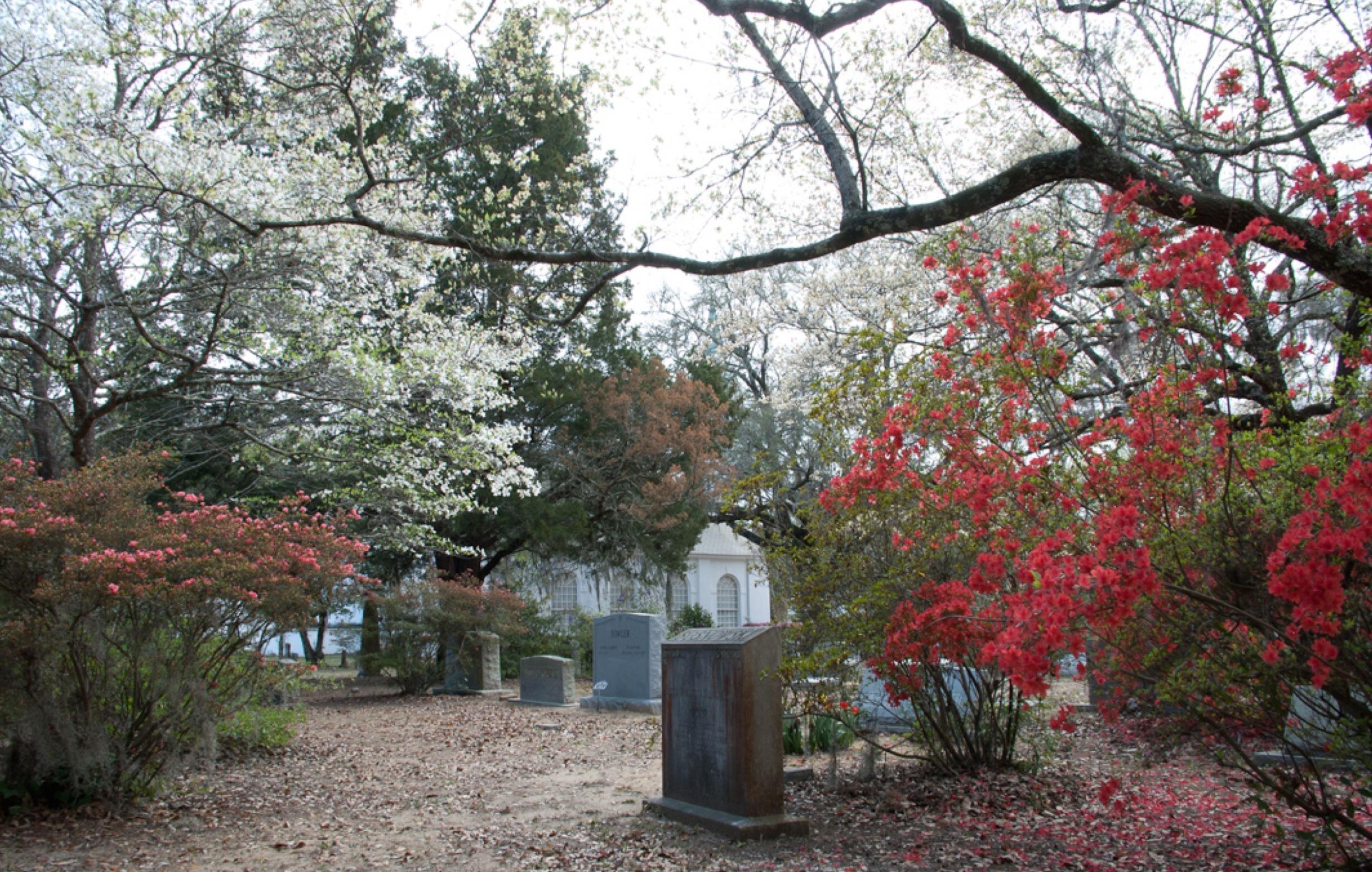 Churchyard in Blossom.jpeg