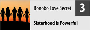 BonoboPromo03.jpg