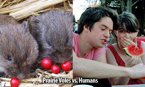 PrairieVolevsHumans.jpg