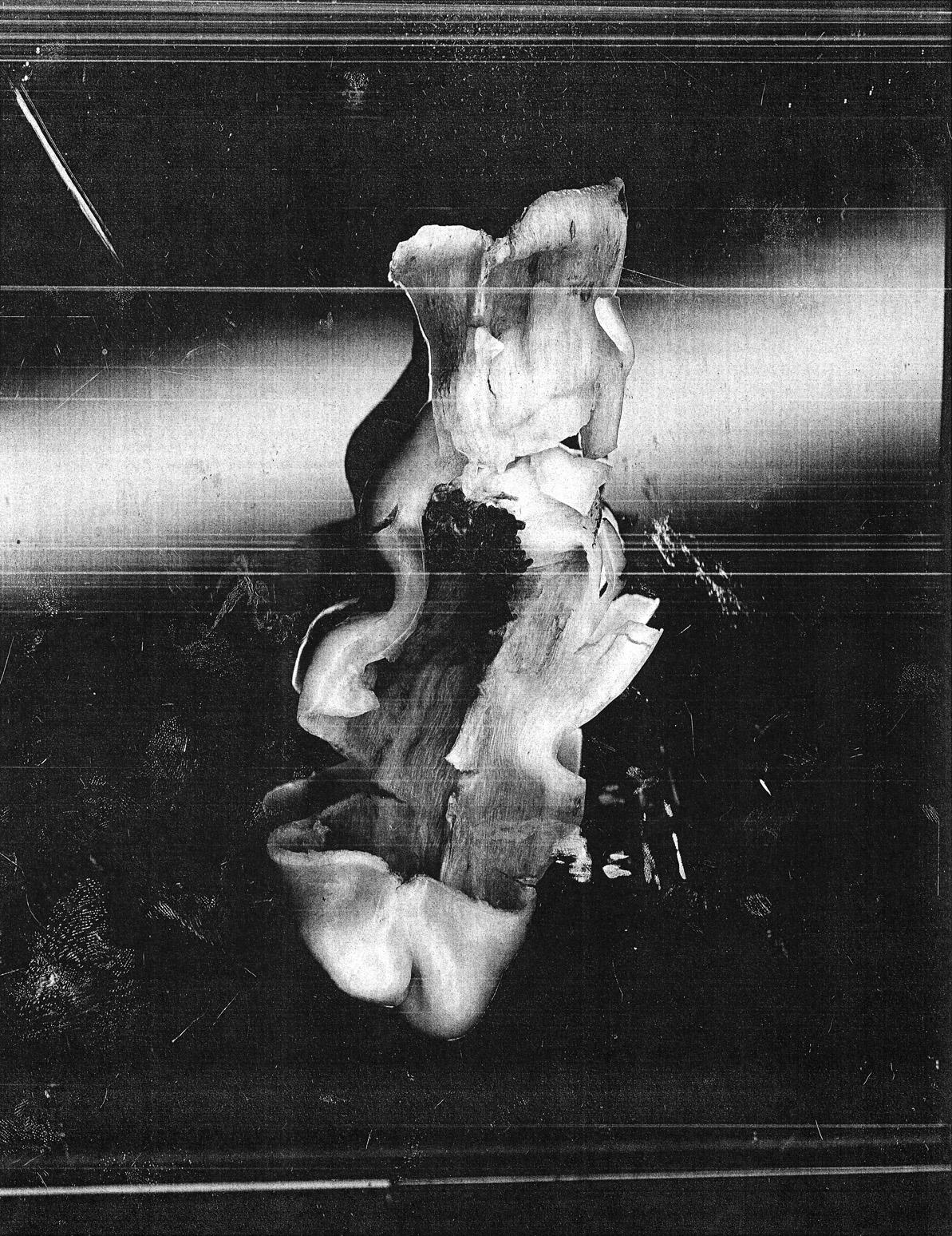 Untitled (Calm Pepper) , 2009, Digital print, Inkjet on Epson Matt paper