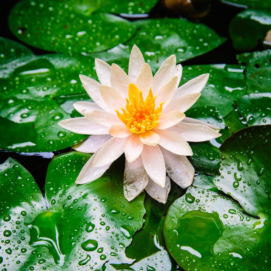 deluge-water-885.jpg