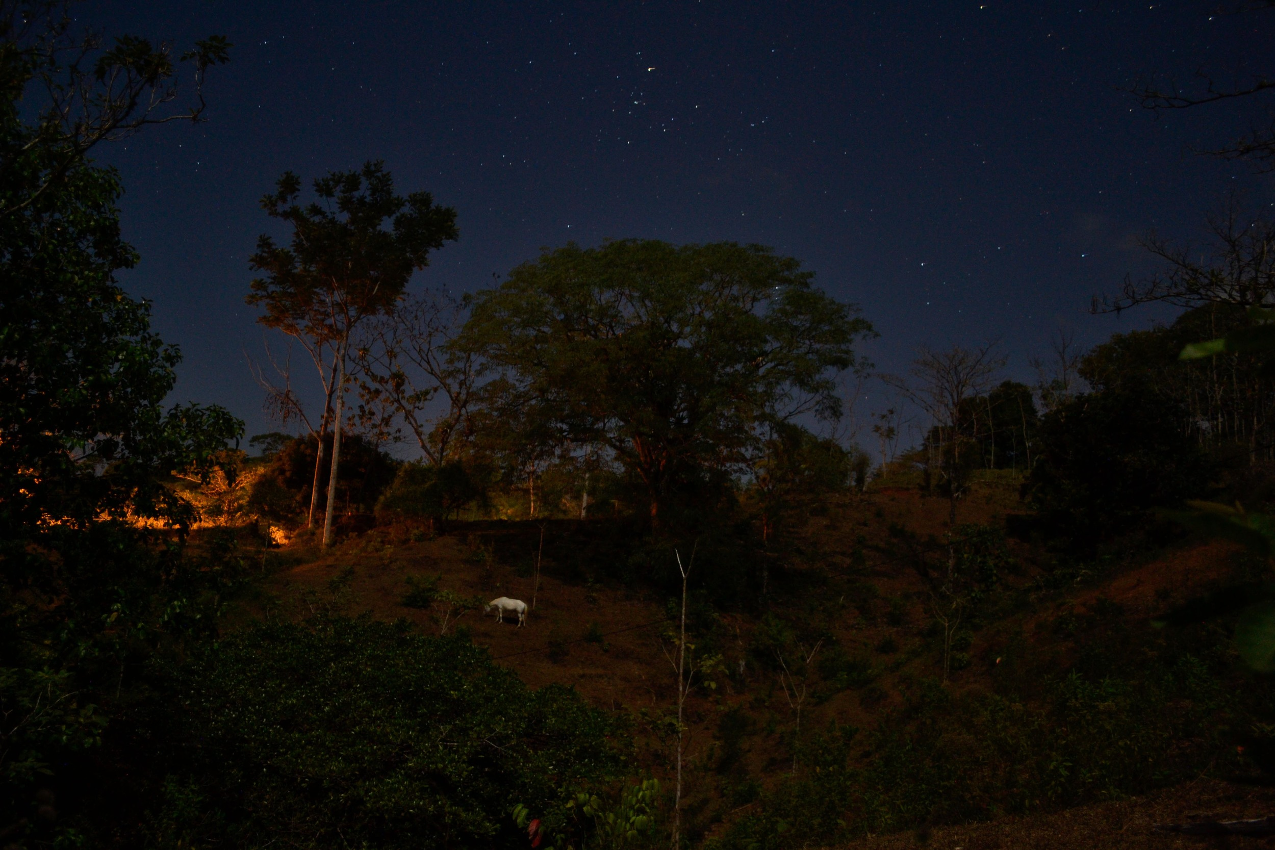 One of La Iguana's horses grazing in the moonlight.