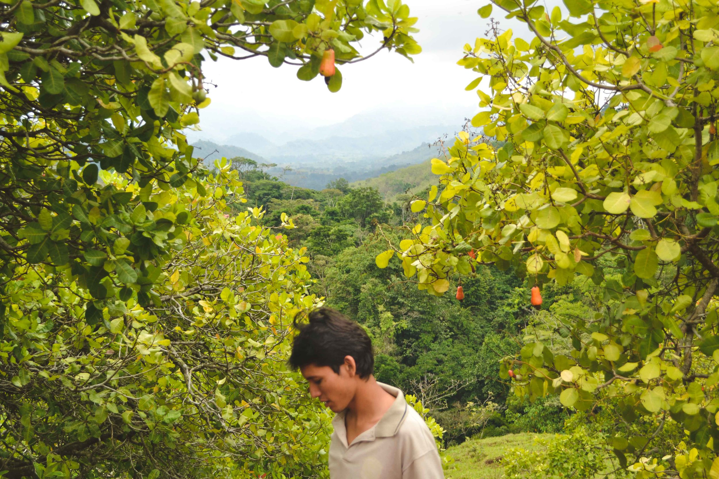 In the Valley of Marañon: Jorge stands among the cashew trees with the cloud forest in the back ground