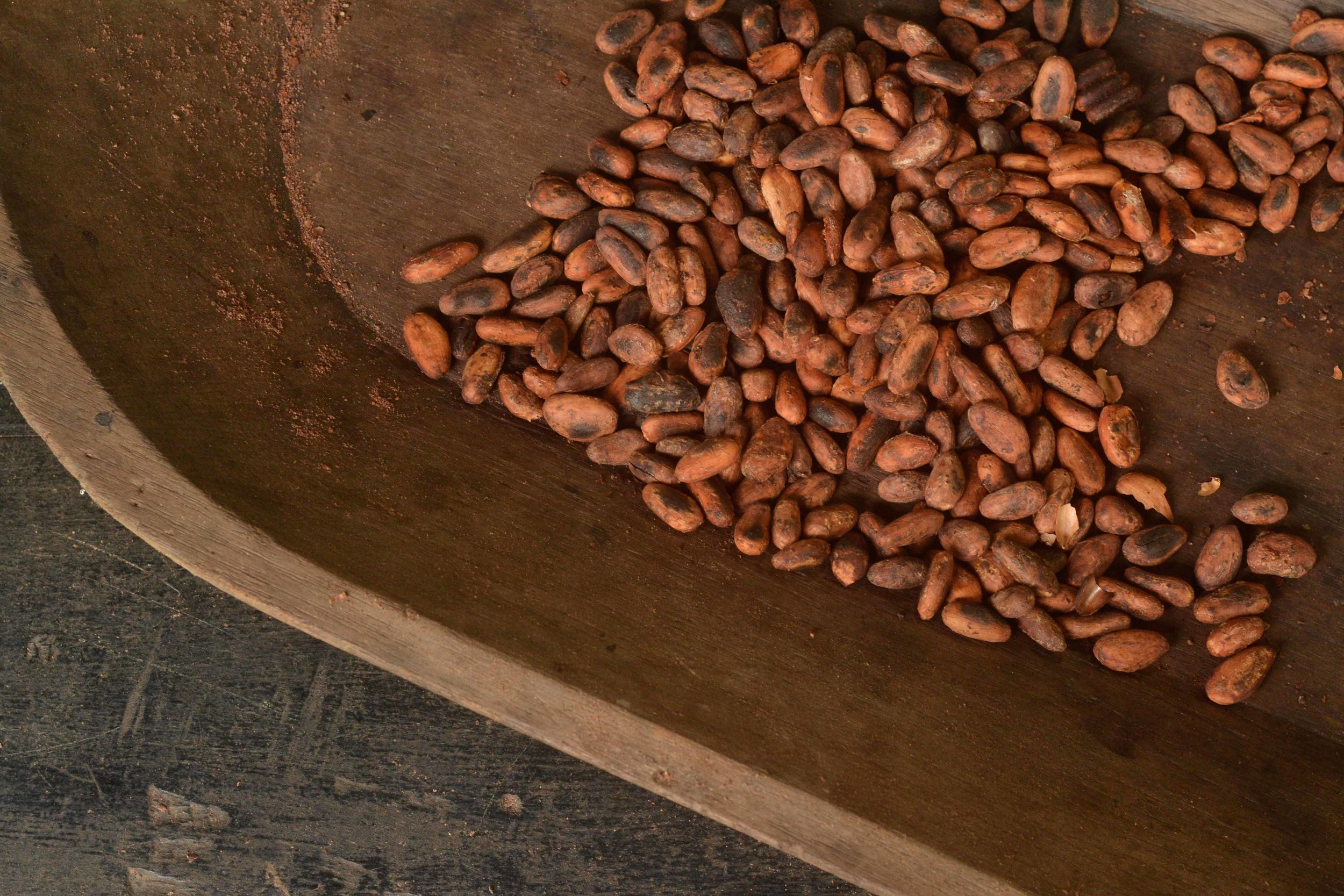 Toasted cacao beans ready to be peeled by hand, one of many labor-intensive steps in the chocolate-making process.