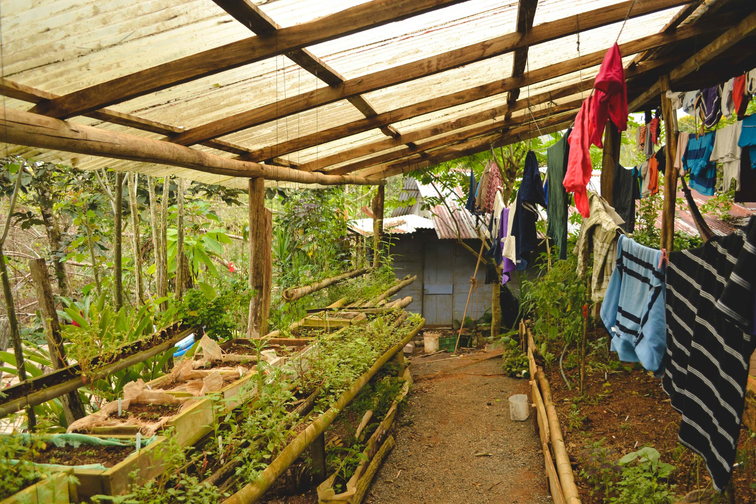 The nursery is where seedlings are started before being transplanted to the larger garden.  It is a covered nursery which makes it great to dry clothes.